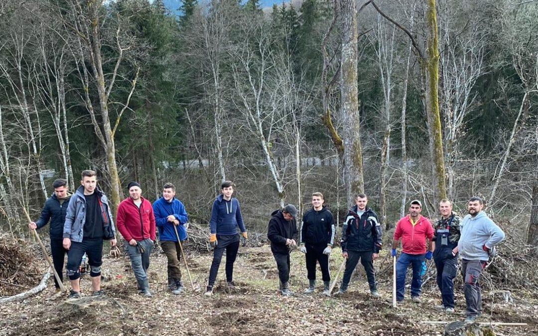 5500 puieți plantați de tinerii ucraineni la Rona de Sus, județul Maramureș